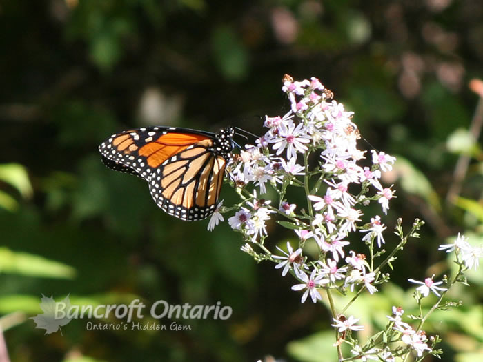 Bancroft Ontario Photo Gallery Bancroft Ontario